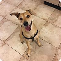 Adopt A Pet :: Jet - Ocean Ridge, FL
