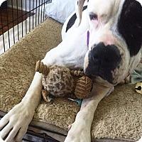 Adopt A Pet :: Baby - Brattleboro, VT