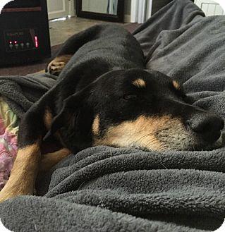 Shepherd (Unknown Type) Mix Dog for adoption in Columbus, Ohio - Lottie
