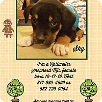 Adopt A Pet :: Sky - springtown, TX