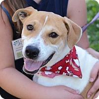Adopt A Pet :: Peanut - Ann Arbor, MI