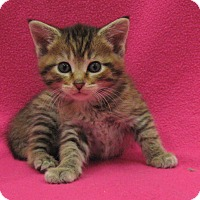 Adopt A Pet :: Jade - Redwood Falls, MN