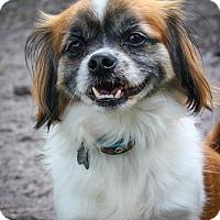 Adopt A Pet :: Smitty - Jupiter, FL