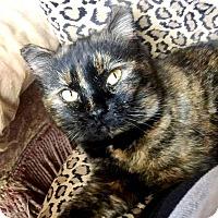 Adopt A Pet :: Cinderella - Edmond, OK