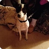 Adopt A Pet :: Lalya - Decatur, AL