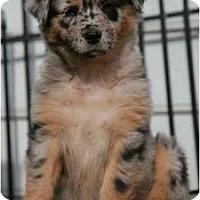 Adopt A Pet :: Cadbury - Richmond, VA