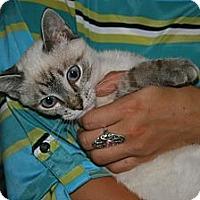 Adopt A Pet :: Ming - Arlington, VA