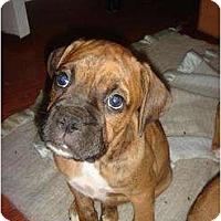 Adopt A Pet :: Fraiser - Lake Forest, CA