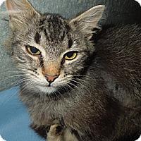 Adopt A Pet :: Pongo - Medina, OH