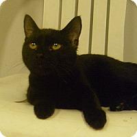 Adopt A Pet :: Crest - Hamburg, NY