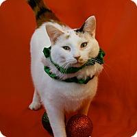 Adopt A Pet :: Poppy - Green Bay, WI