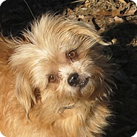 Adopt A Pet :: Reddy - Harrisonburg, VA