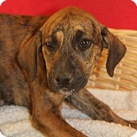 Adopt A Pet :: Petunia - Waldorf, MD