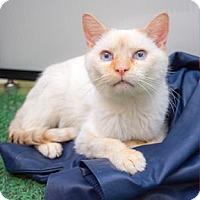 Adopt A Pet :: Sabby - North Ogden, UT