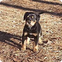 Adopt A Pet :: Eiffel - Marietta, GA