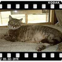 Adopt A Pet :: DELILAH - Medford, WI