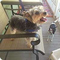 Adopt A Pet :: Joey 4yr - Mentor, OH