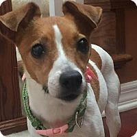 Adopt A Pet :: Jackie - Windermere, FL