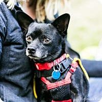 Adopt A Pet :: Dupie - Washington, DC