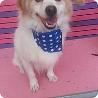 Adopt A Pet :: Kevin - Long Beach, CA