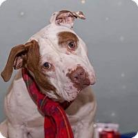 Adopt A Pet :: Dougy - Flint, MI