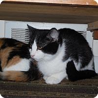 Adopt A Pet :: Sammy - CARVER, MA