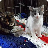 Adopt A Pet :: Cup Cake - CARVER, MA