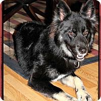 Adopt A Pet :: Brody - Monroe, NC