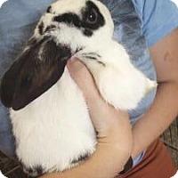 Adopt A Pet :: Speck - Los Angeles, CA