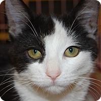Adopt A Pet :: Sadie - Whittier, CA