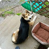 Adopt A Pet :: Kaya (KL) - Washington, DC