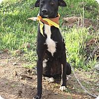 Adopt A Pet :: AVA - Poway, CA