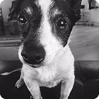 Adopt A Pet :: Julia - Marietta, GA