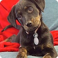 Adopt A Pet :: Andrea - Knoxville, TN