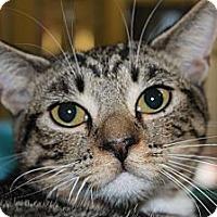 Adopt A Pet :: Winston - Santa Monica, CA