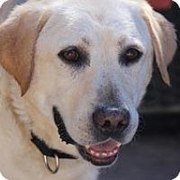 Adopt A Pet :: Wallie - Torrance, CA