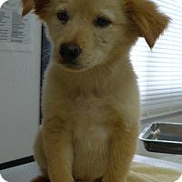 Adopt A Pet :: Sharon - Manning, SC