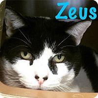 Adopt A Pet :: Zeus - La Grange Park, IL