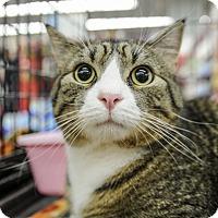 Adopt A Pet :: Jacobus - Wayne, NJ