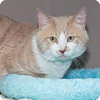 Adopt A Pet :: Malcolm - Elmwood Park, NJ