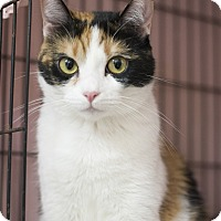 Adopt A Pet :: Tilda - Houston, TX