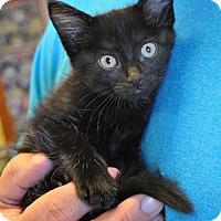 Adopt A Pet :: Bruce Wayne - Atlanta, GA