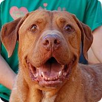 Adopt A Pet :: Courage - Las Vegas, NV