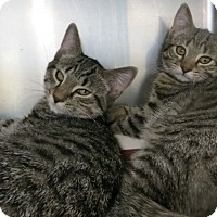 Adopt A Pet :: Jeremy & Jillian - Brockton, MA