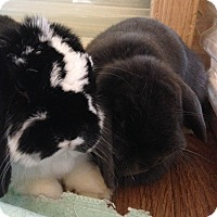 Adopt A Pet :: Forest & Finley - Watauga, TX