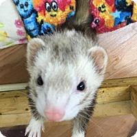 Adopt A Pet :: Marla - Fawn Grove, PA