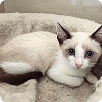 Adopt A Pet :: Tip - Austin, TX