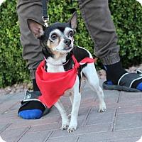 Adopt A Pet :: WILHELMINA - Las Vegas, NV