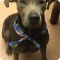 Adopt A Pet :: Bluebell 9432 - Columbus, GA