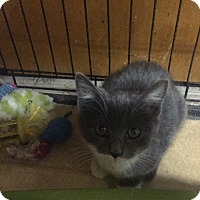 Adopt A Pet :: Tiny Dancer - Forest Hills, NY